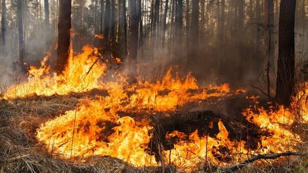 На Херсонщині горить 20 га лісу