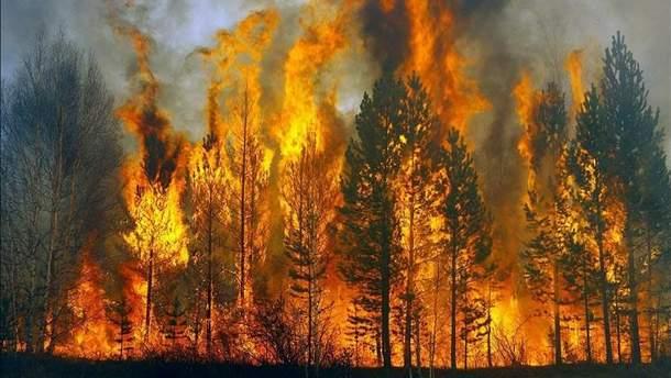 На Херсонщині горять ліси