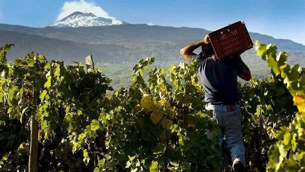 """Новий тренд: де знайти унікальне """"вулканічне"""" вино"""