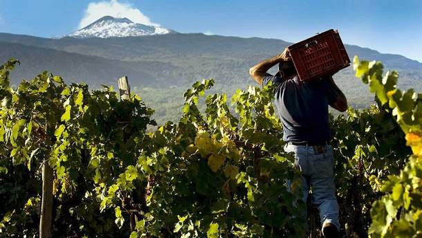 """Новый тренд: где найти уникальное """"вулканическое"""" вино"""