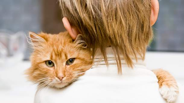 Кто видит лучше: люди или коты – исследование ученых
