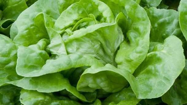 В США почти 200 человек отравились салатом