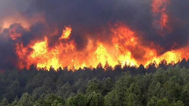 Спасатели ликвидировали масштабный лесной пожар на Херсонщине