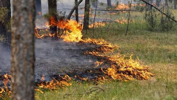 Объявлен высший уровень пожарной опасности на территории Украины