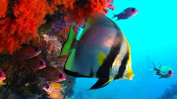 BBC опублікував вражаючі 10-годинні відео про океан