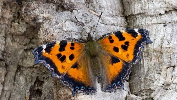 Бабочки в Киеве: причины нашествия