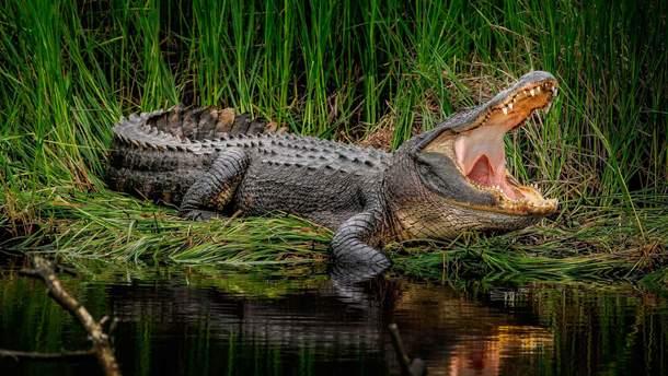 Крокодил вбив пастора
