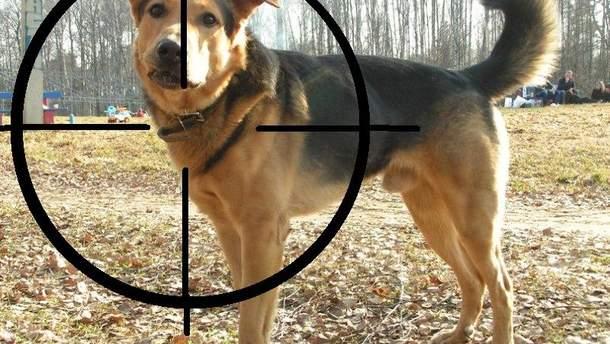 Догхантери полюють на собак