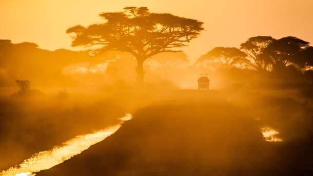 В Африці раптово помирають тисячолітні баобаби