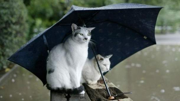 Прогноз погоди в Україні на 14 червня