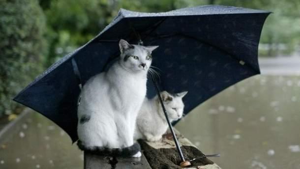 Прогноз погоды в Украине на 14 июня