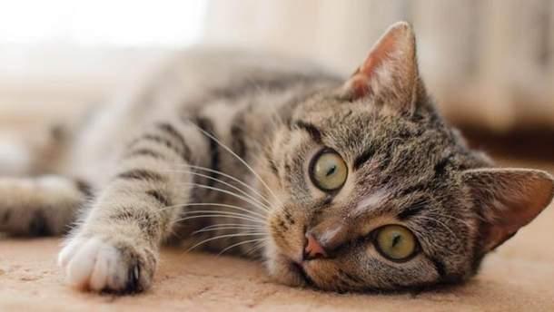 Сеть без ума от оптической иллюзии с котом