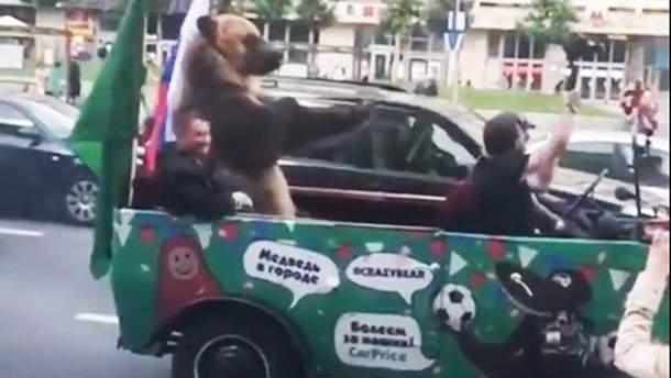 В Москве медведь показывал гостям ЧМ-2018 неприличные жесты