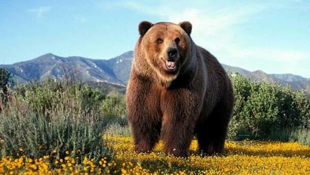 В России медведь напал на дрессировщика цирка
