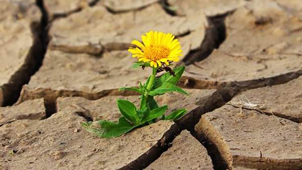 Частину України охопила засуха
