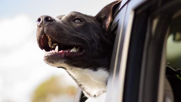 Назвали 19 жестів, якими собаки спілкуються з людьми: повний перелік