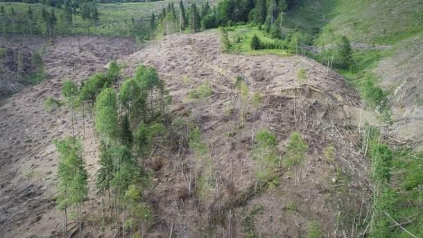 Вирубка лісу в Усть-Чорній