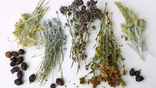 Настійки на травах: експерименти Клима Житник