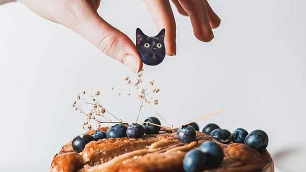 Ілюстратор дотепно поєднує фото котів та їжі: весела добірка