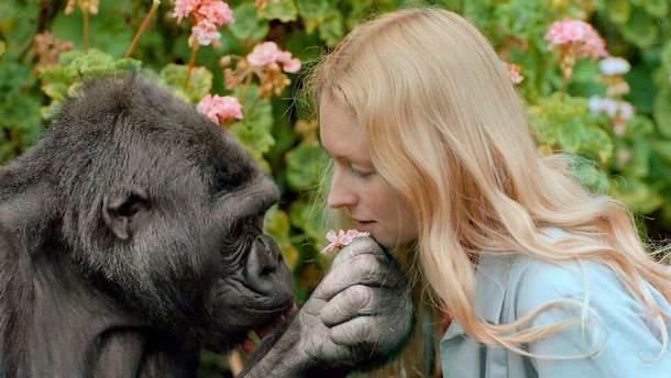 Померла горила Коко – тварина, яка знала мову жестів
