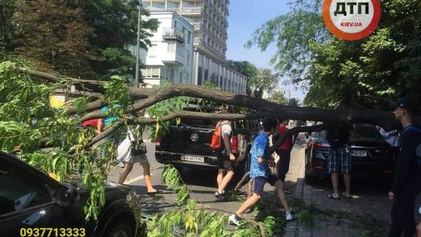 Дерево упало на машины возле Рады