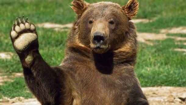 В США полицейский помог спастись медведю, который застрял в автомобиле