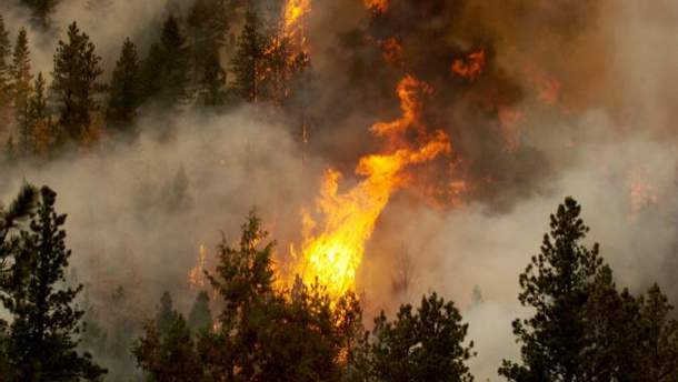 В Швеции вспыхивают лесные пожары