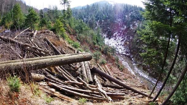 Українці змушені незаконно вирубувати ліси через брак роботи