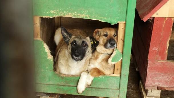 Петиція покликана зменшити кількість безпритульних тварин в Україні