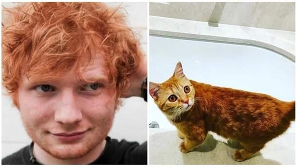 Ед Ширан створив сторінку в Instagram для своїх котів: кумедні фото