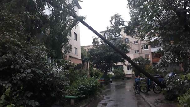 У Вінниці на п'ятиповерховий будинок впала акація