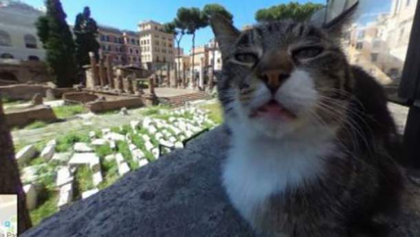 На Google Maps заметили морду кота