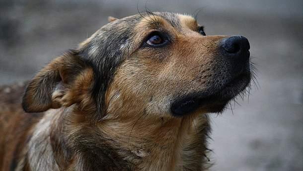 В Кропивницком неизвестные отрезали головы щенкам