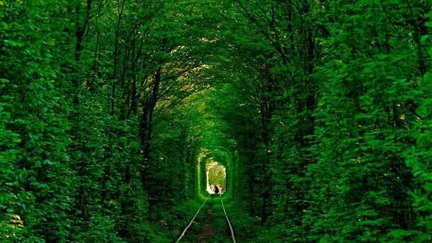 """В'їзд у """"Тунель кохання"""", що на Рівненщині, буде платним"""