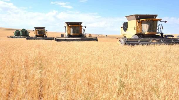 Максим Мартынюк рассказал, на чем зарабатывают аграрии максимальную прибыль