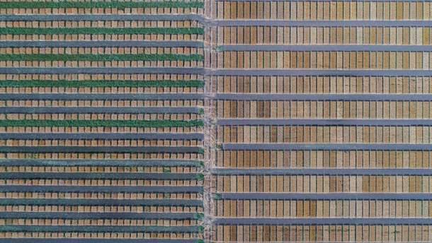 Селекционные поля в Дубаивци