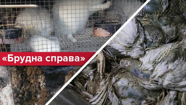 Інтенсивне тваринництво, як новий виклик України