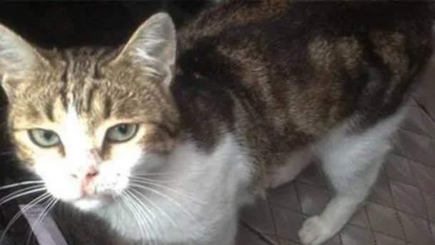 Наркотики намагалися доправити у котячому нашийнику