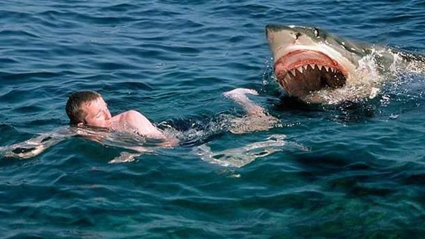 У Єгипті акула вбила чоловіка
