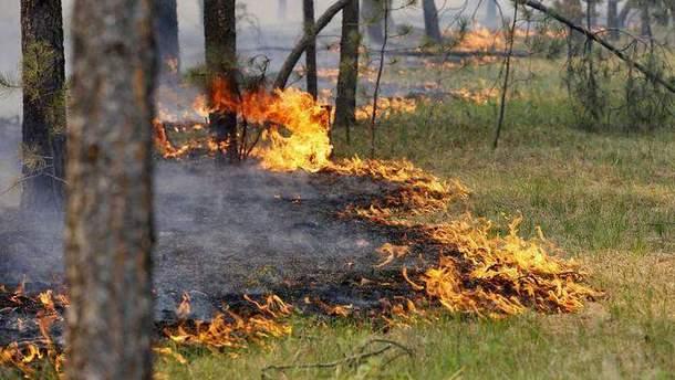 В Украине объявили предупреждение о пожарной опасности