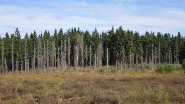 По состоянию на сегодня общая площадь усыхания составляет почти 400 тысяч гектаров
