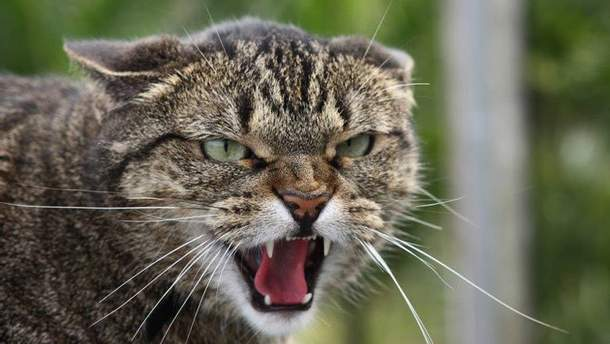 У Харкові троє людей постраждало від нападу скажених котів
