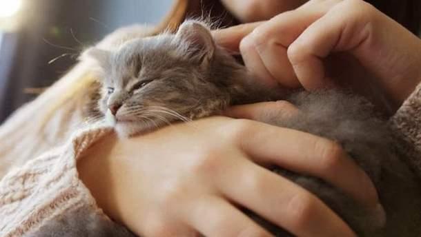 Как кошки влияют на беременных
