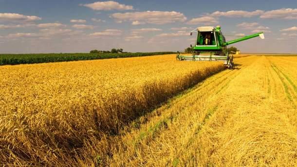 Офіційні дані: Скільки Україна зібрала зерна