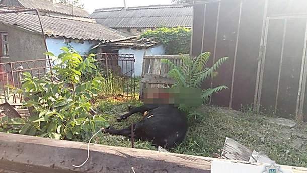 На Николаевщине бешеного быка останавливали выстрелами