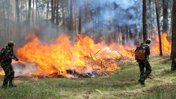 В Украине ожидается самый высокий уровень пожарной опасности