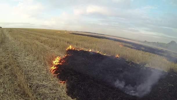 Сжигание стерни: чем опасно