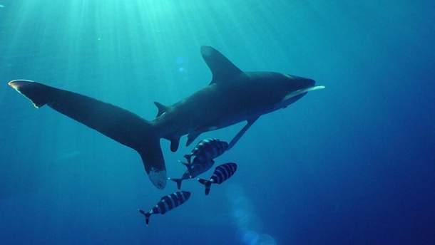 В Британии зафиксировали гигантскую акулу