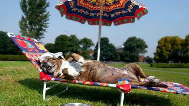 Как спасти животное от адской жары