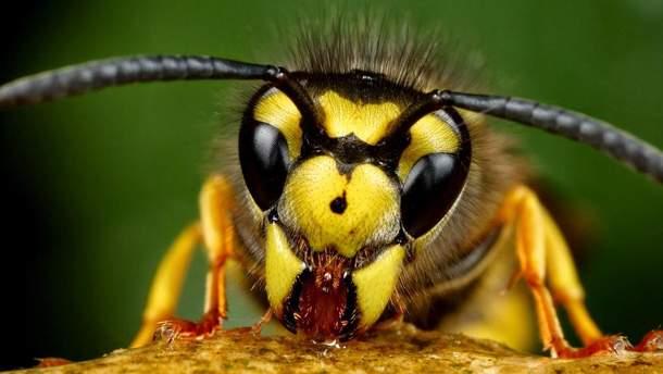 65 тысяч евро штрафа за убийство осы